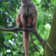 """Capuchin in a tree Monkey Island (""""Isla de los Monos"""")"""