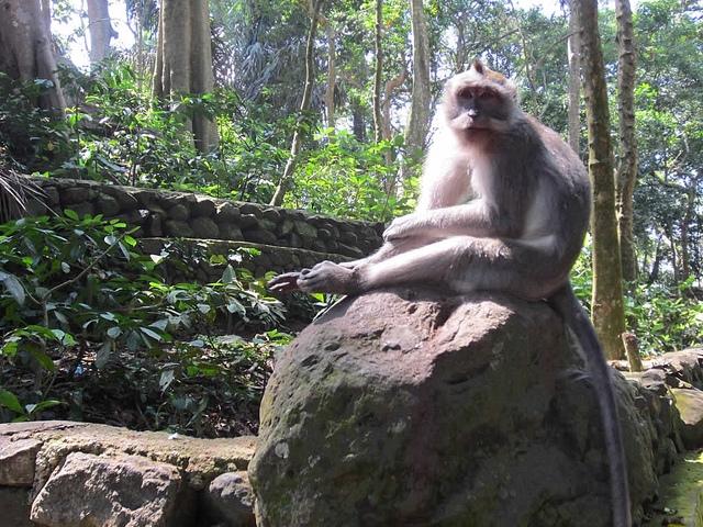 Sacred-Monkey-Forest-Sanctuary