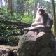 Sacred-Monkey-Forest-Sanctuary