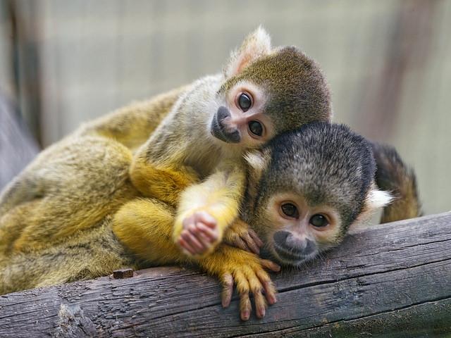 Two-cute-friends