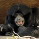 I am a very happy Gibbon