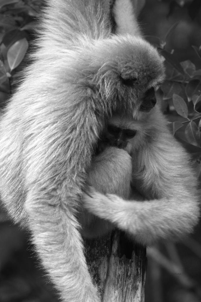 Father and son cuddle in Borneo