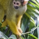 Cute squirrel monkey on the plants