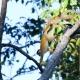 Squirrel-Monkey-Playing