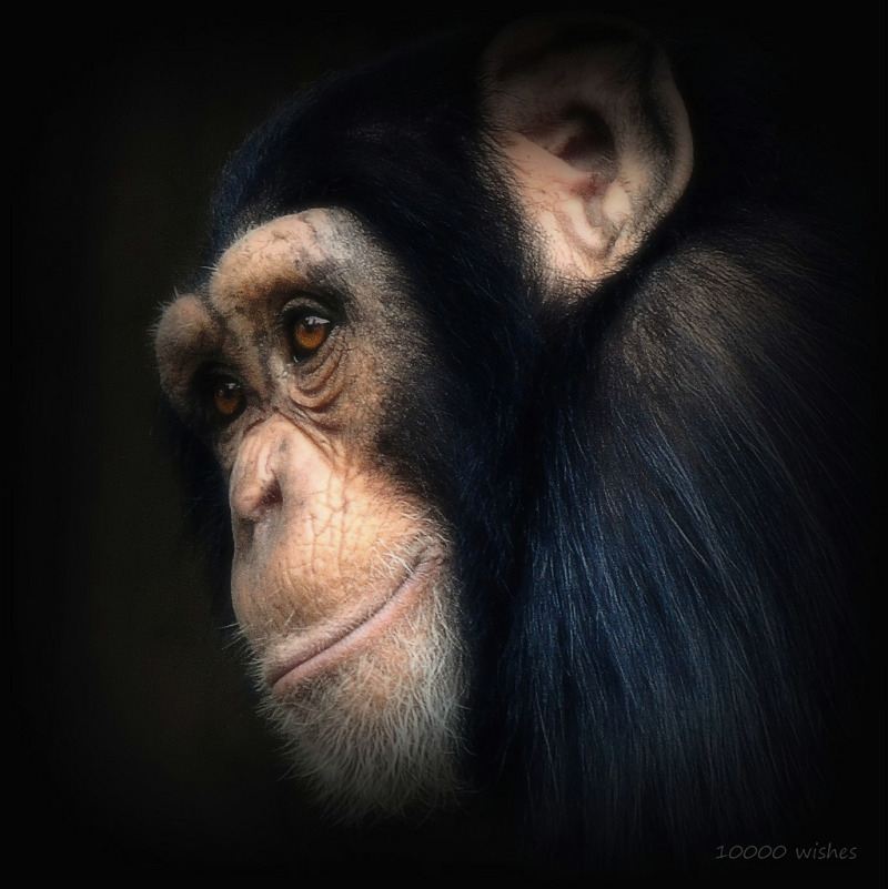 Portrait of a primate