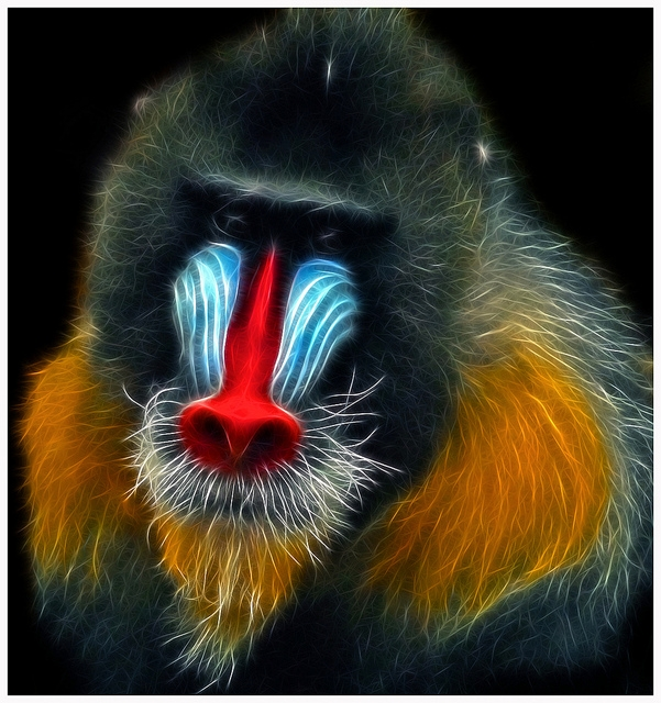 The-Fractal-Mandrill