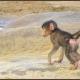 Baboon Baby on the Rocks