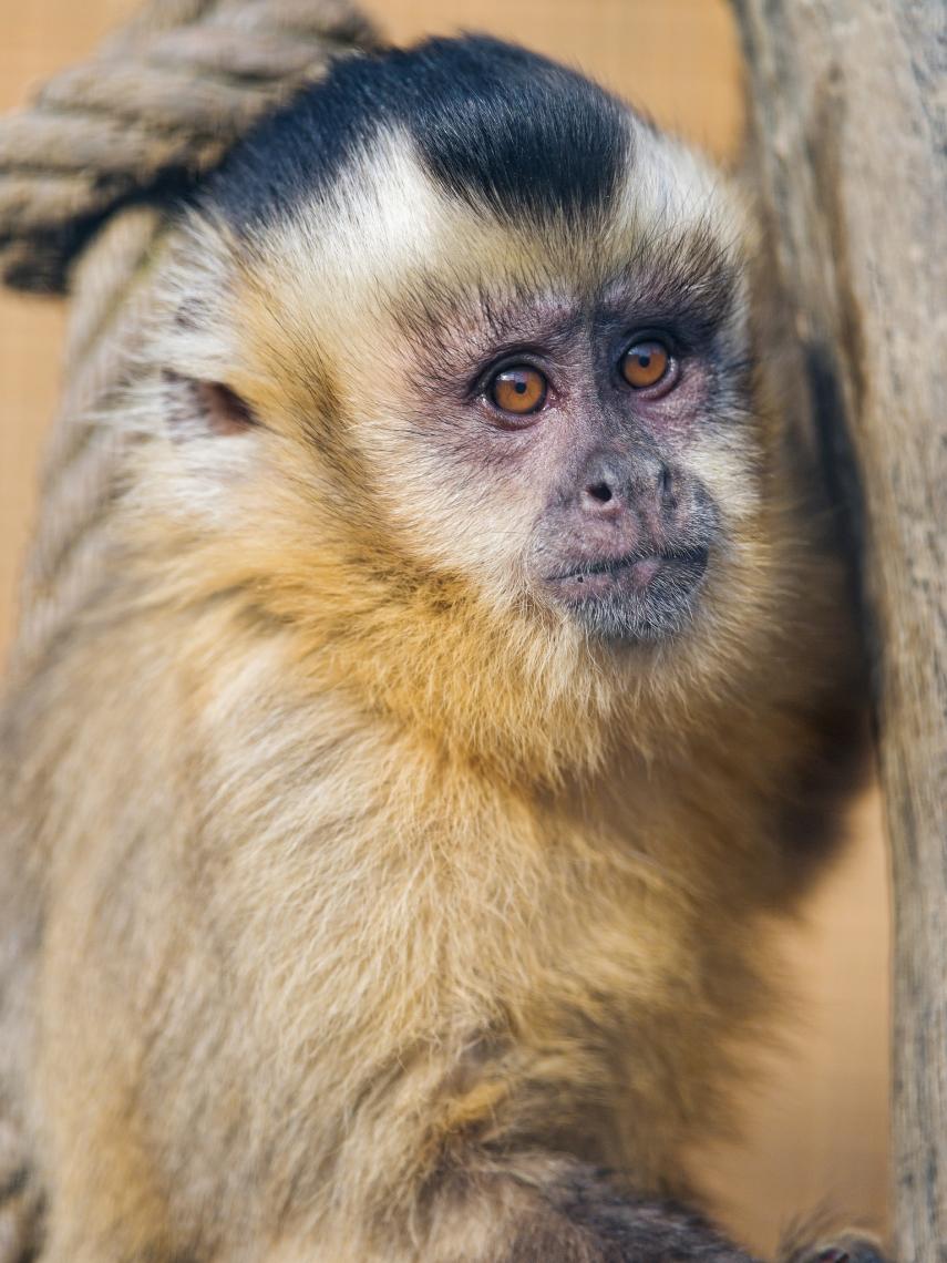 Monkey-in-the-sun