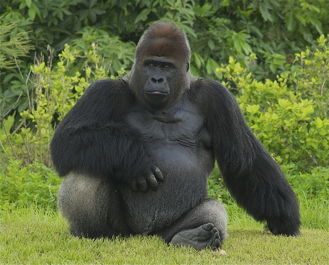 One-huge-handsome-fella