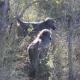South-Africa-Kruger-National-Park