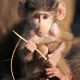 Baby-Baboon-1