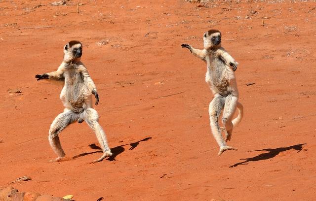 Verreauxs-Dancing