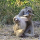 Natures Spa and Baboon pampering