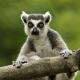 Its-lemur-time
