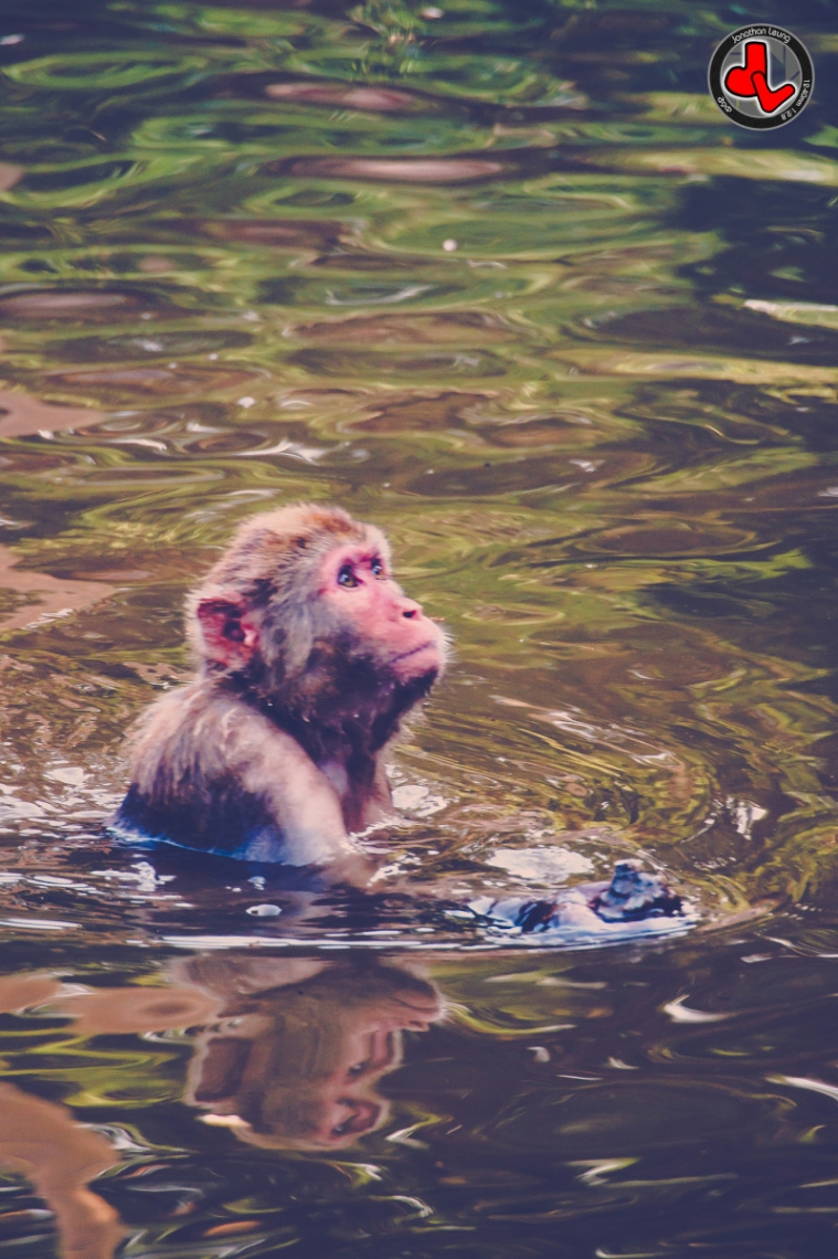 Monkey having a bath in a Chinese river