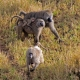 Baboon family in Serengeti