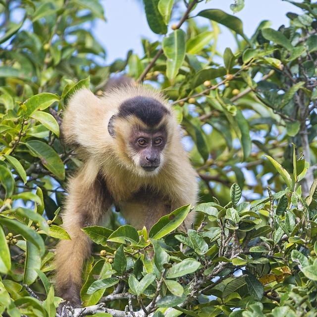 Monkey-in-the-tree