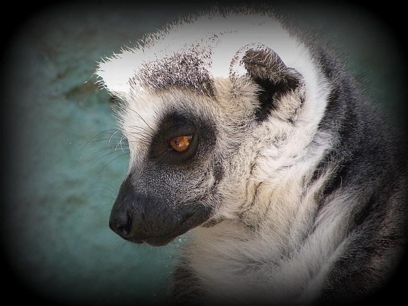 What a photogenic Lemur