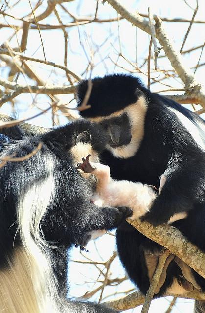 Handing-over-the-baby-to-Mum