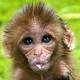 Monkeys-at-Svayambunath-3