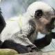 Meet Raj the cute monkey
