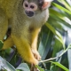 Cute-squirrel-monkey-on-the-plants