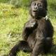 Course-for-gorilla-babys