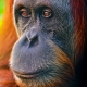 Close-up-of-a-calm-orang-utan