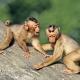 Laponder-Burgerszoo-monkeys