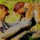 Fighting Monkeys in Borneo