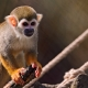 Squirrel-monkeys-of-the-Kinderzoo-Knie