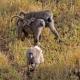 Baboon family in Serengeti