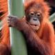 Sepilok-Orangutan-Rehab-Centre