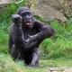 Gorilla-apenheul