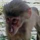 Baby Baboon looks so sad